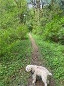 Spring walk on the McKinnon Creek Trail