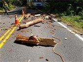 Fallen tree branches across roadway