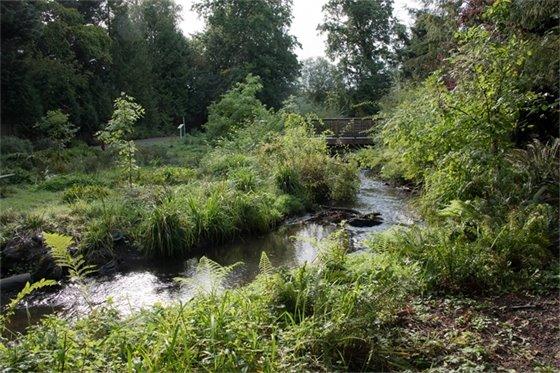 Lyon Creek near Whispering Willow Park