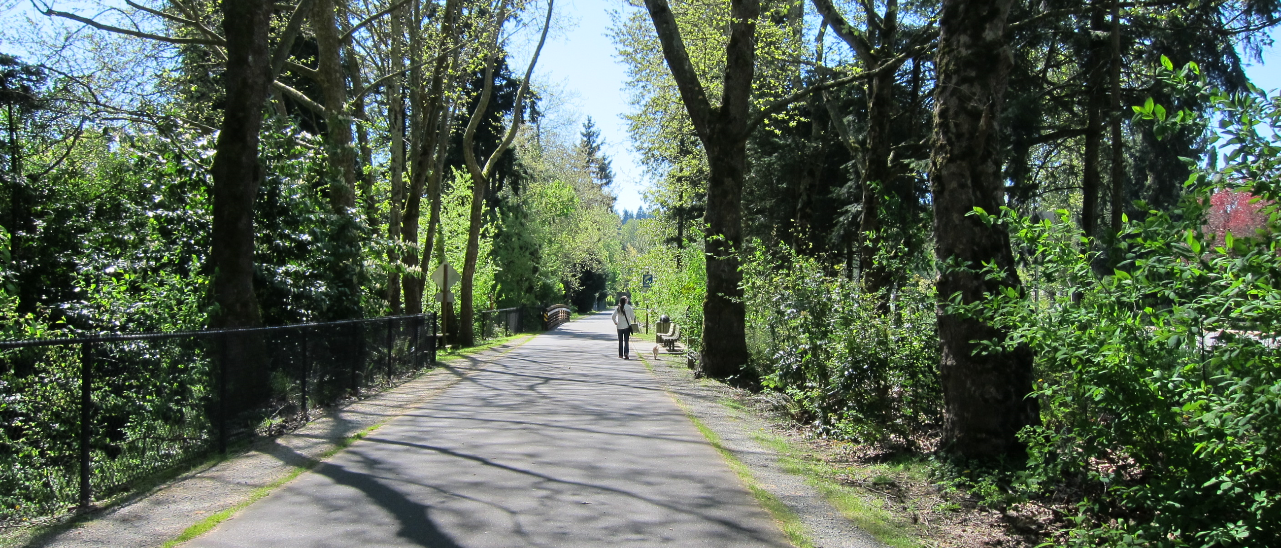 Burke Gilman Trail Dog Walker 4-29-2019 R